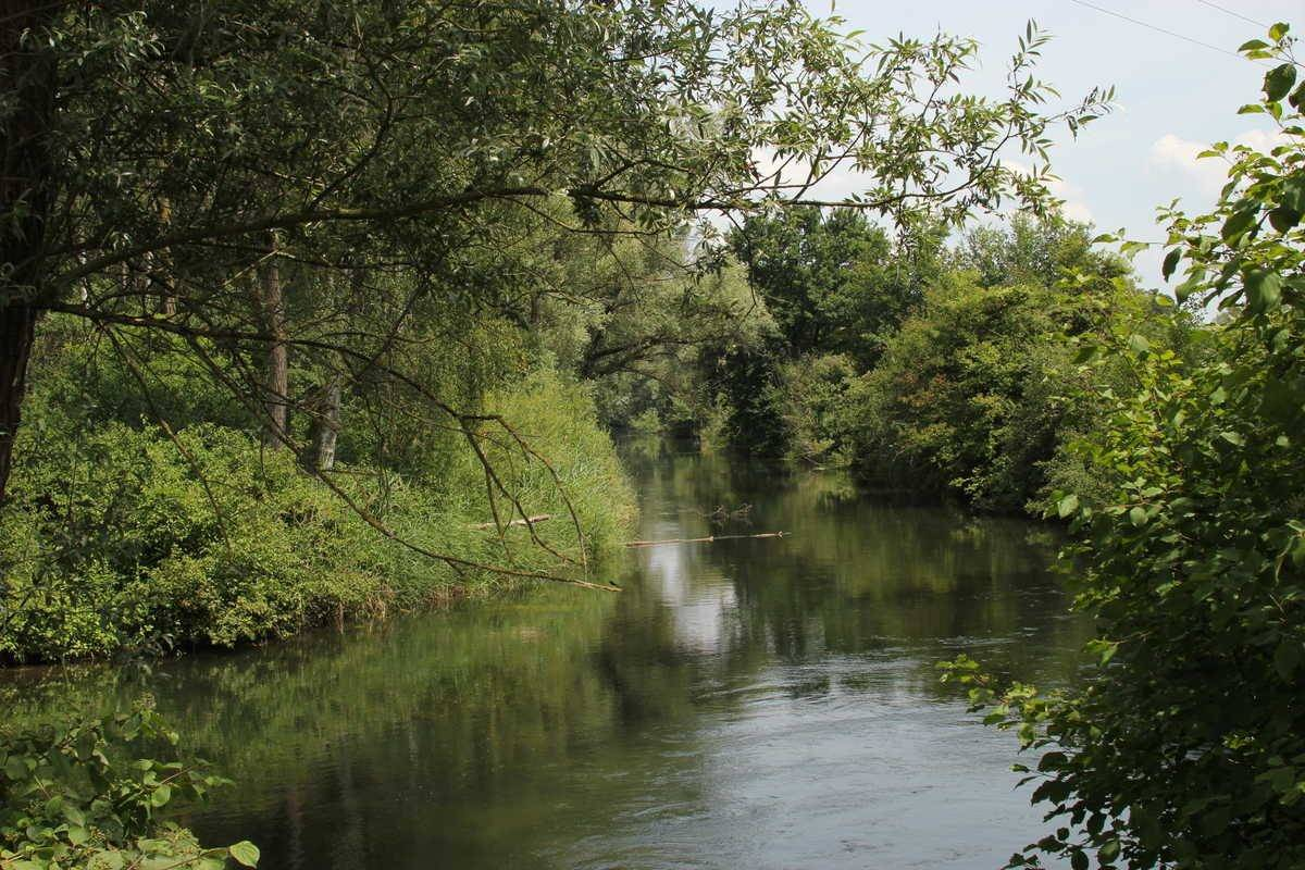 Wildkräuterwanderung am Altrhein