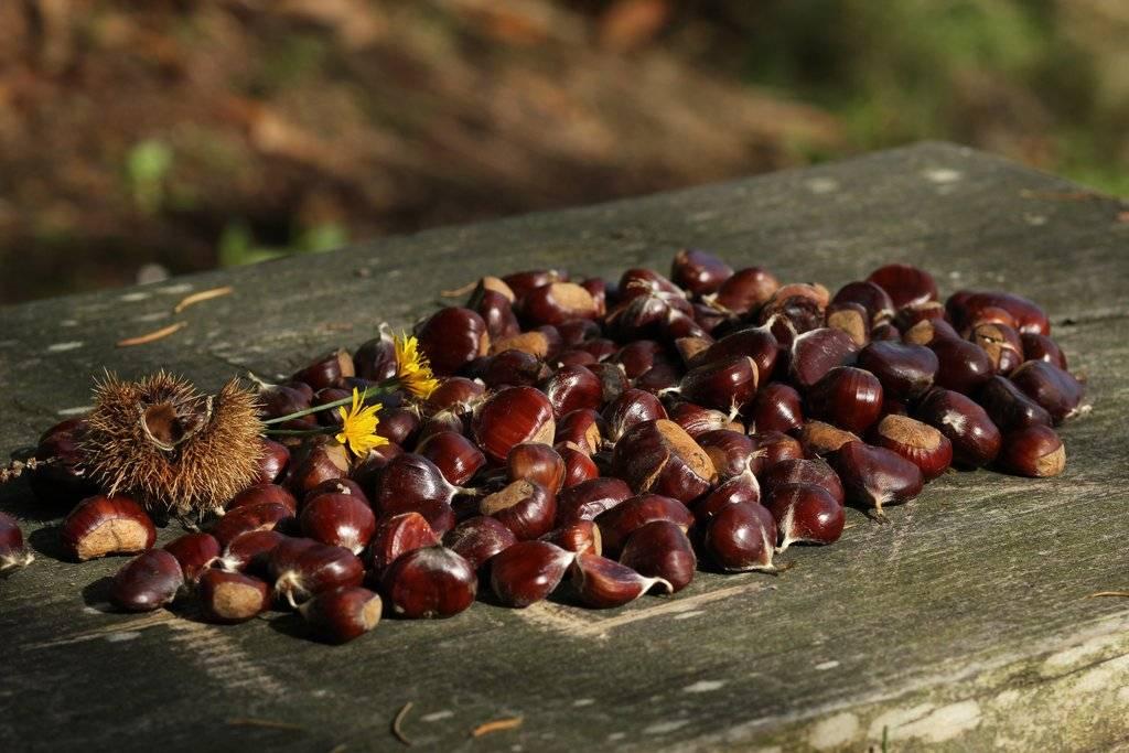 Wildkräuter, Wildkräutersamen, Beeren und Kastanien im Herbst entdecken
