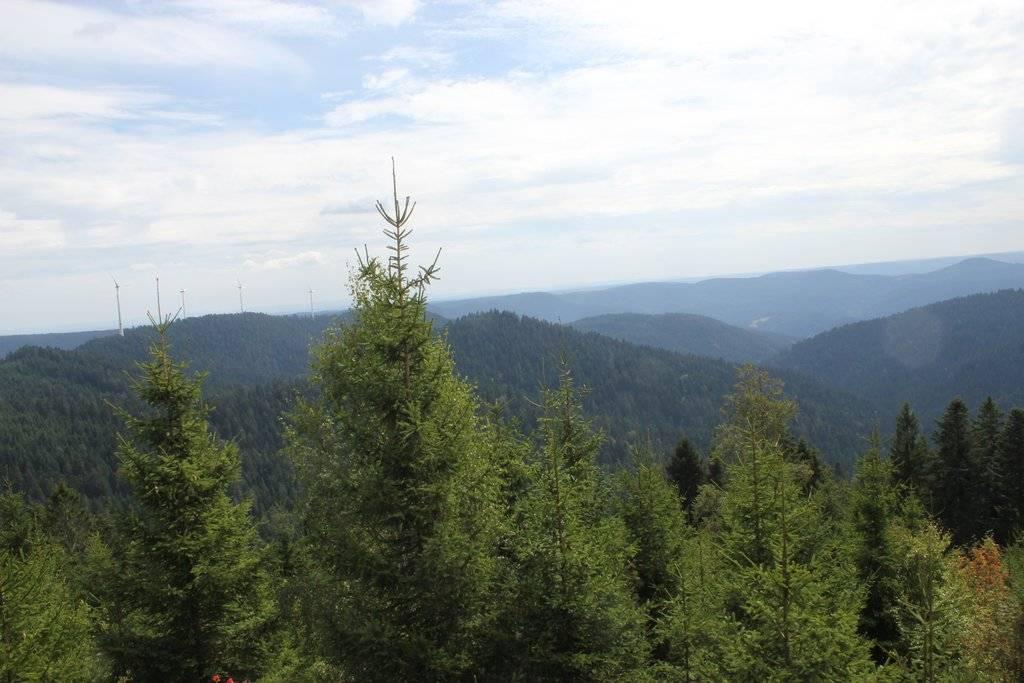 Schwarzwald-Exkursion: Wildkräuter für das Butterbrot