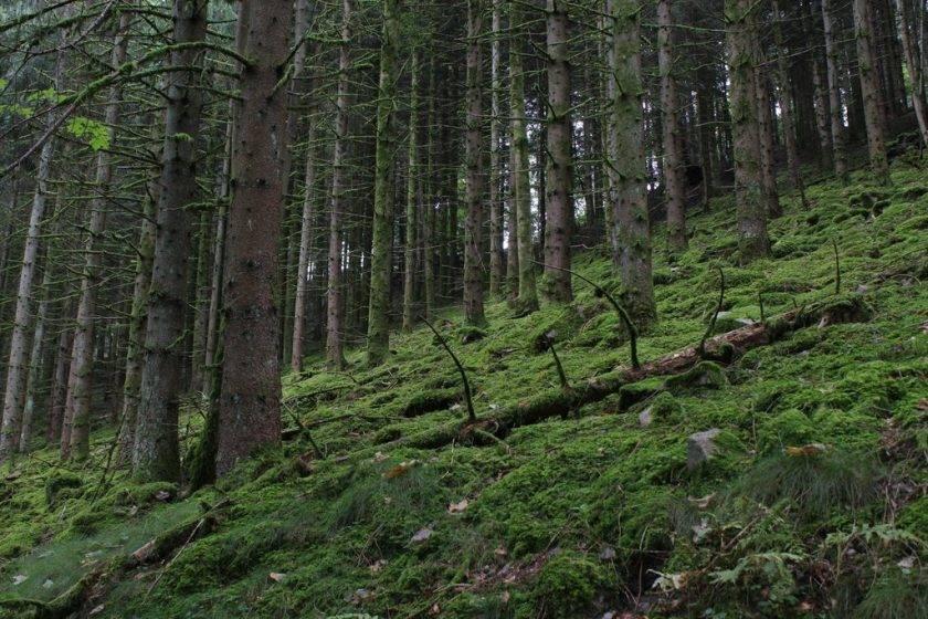 Kräuterwanderung im Schwarzwald