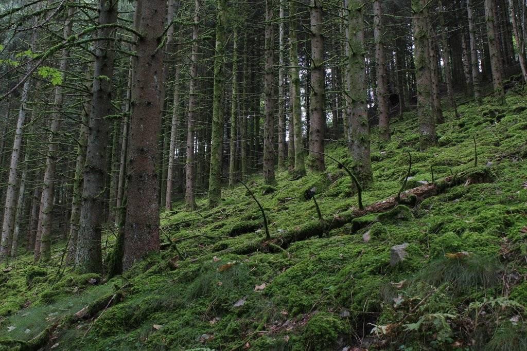 Wildkräuterwanderung im Schwarzwald bei (Hinter)Ohlsbach