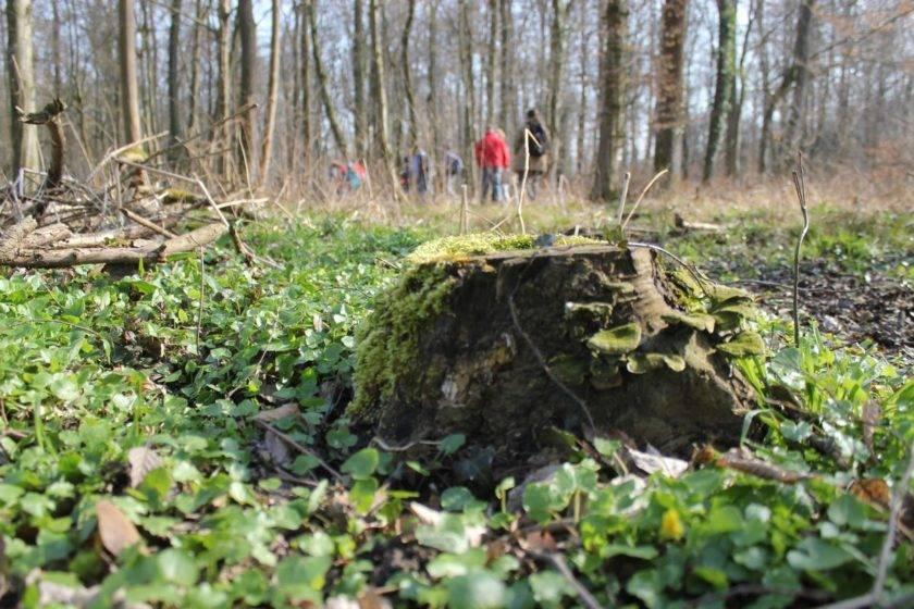 Bärlauchwanderung und Frühlingssuppe