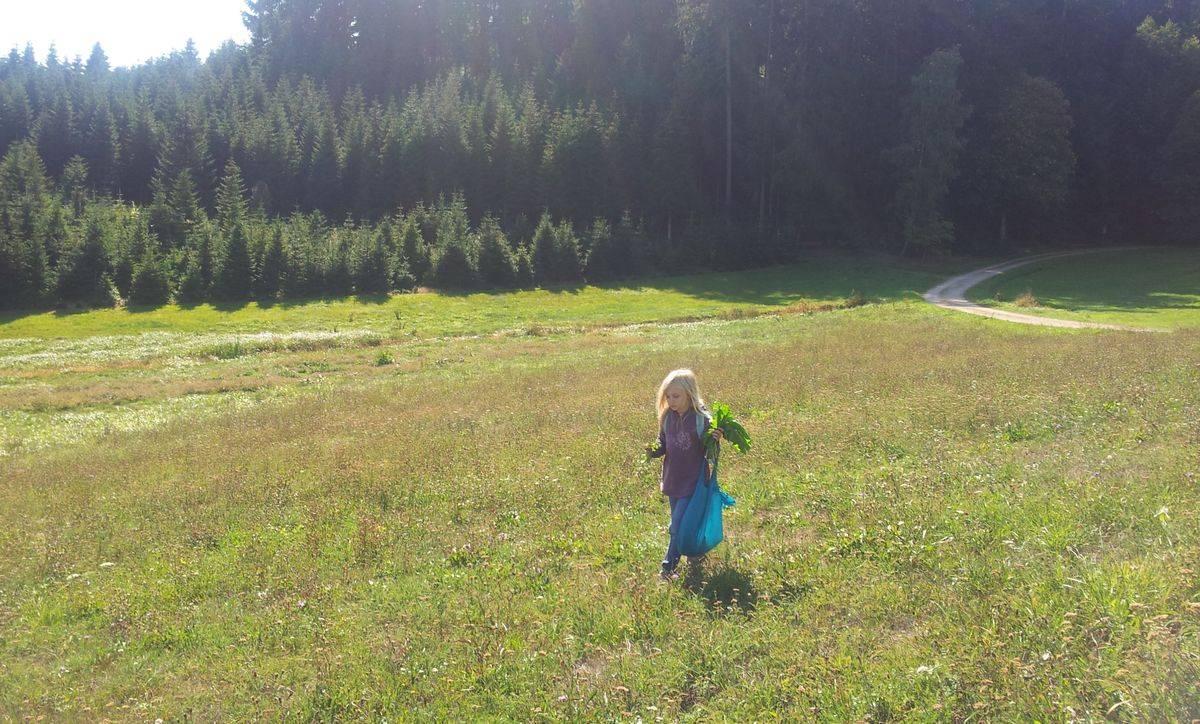 Herbstexkursion: Wildkräuter, Samen, Nüsse bestimmen und unterwegs zubereiten