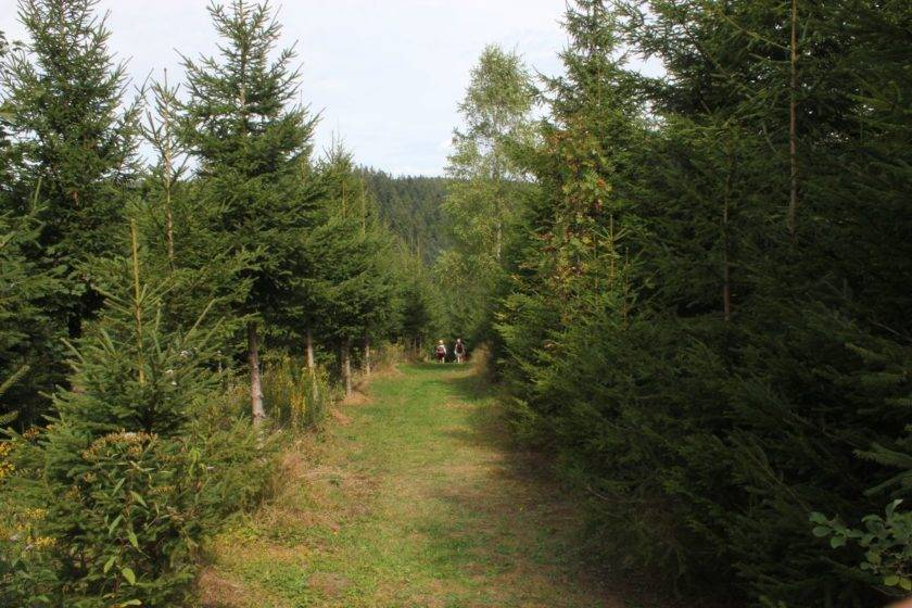 Weg im Schwarzwald