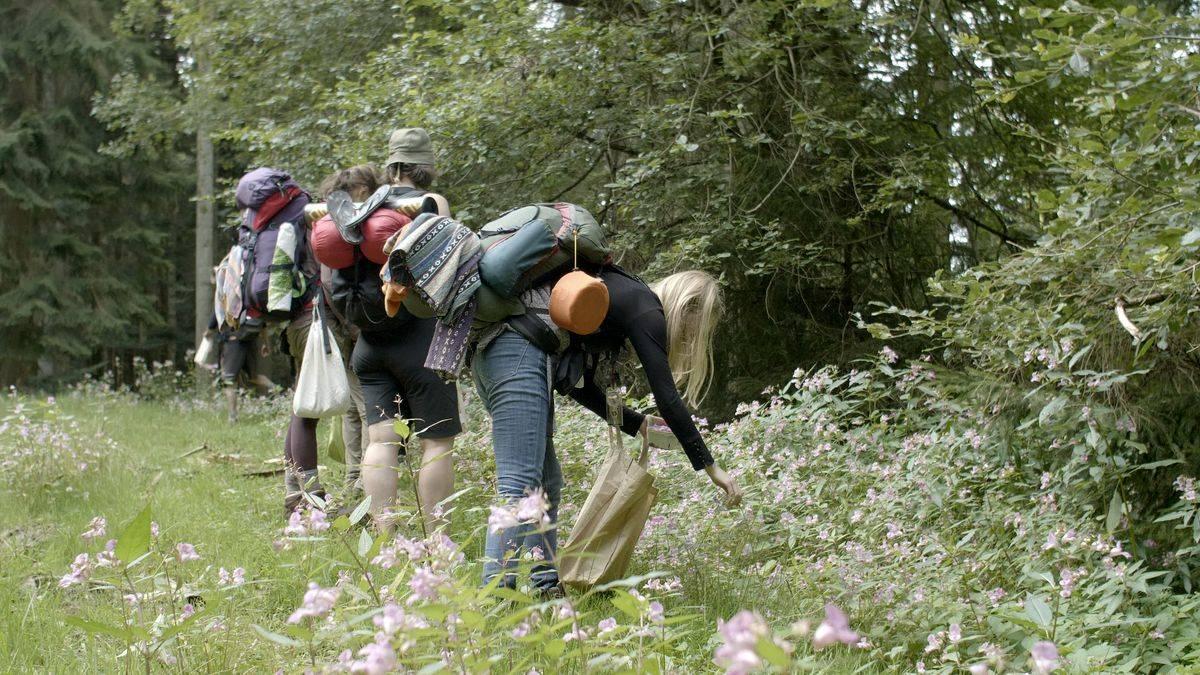 Survival-Wanderung: Mit Essbarem aus der Natur im Schwarzwald überleben