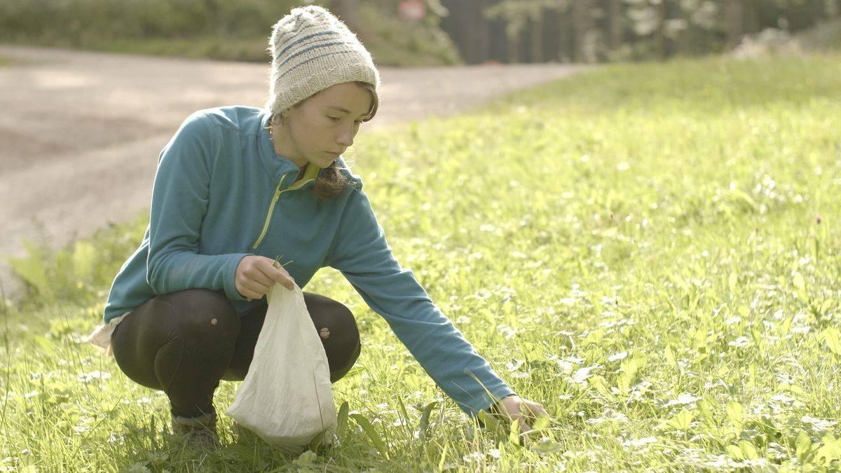 Herbstwanderung: Wildkräuter, Nüsse, Samen, Pilze im Wald finden (Luxemburg)