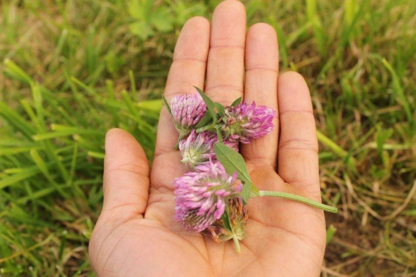 Kräuterblüten