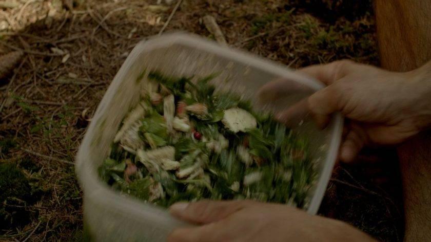 Kräuterobstsalat